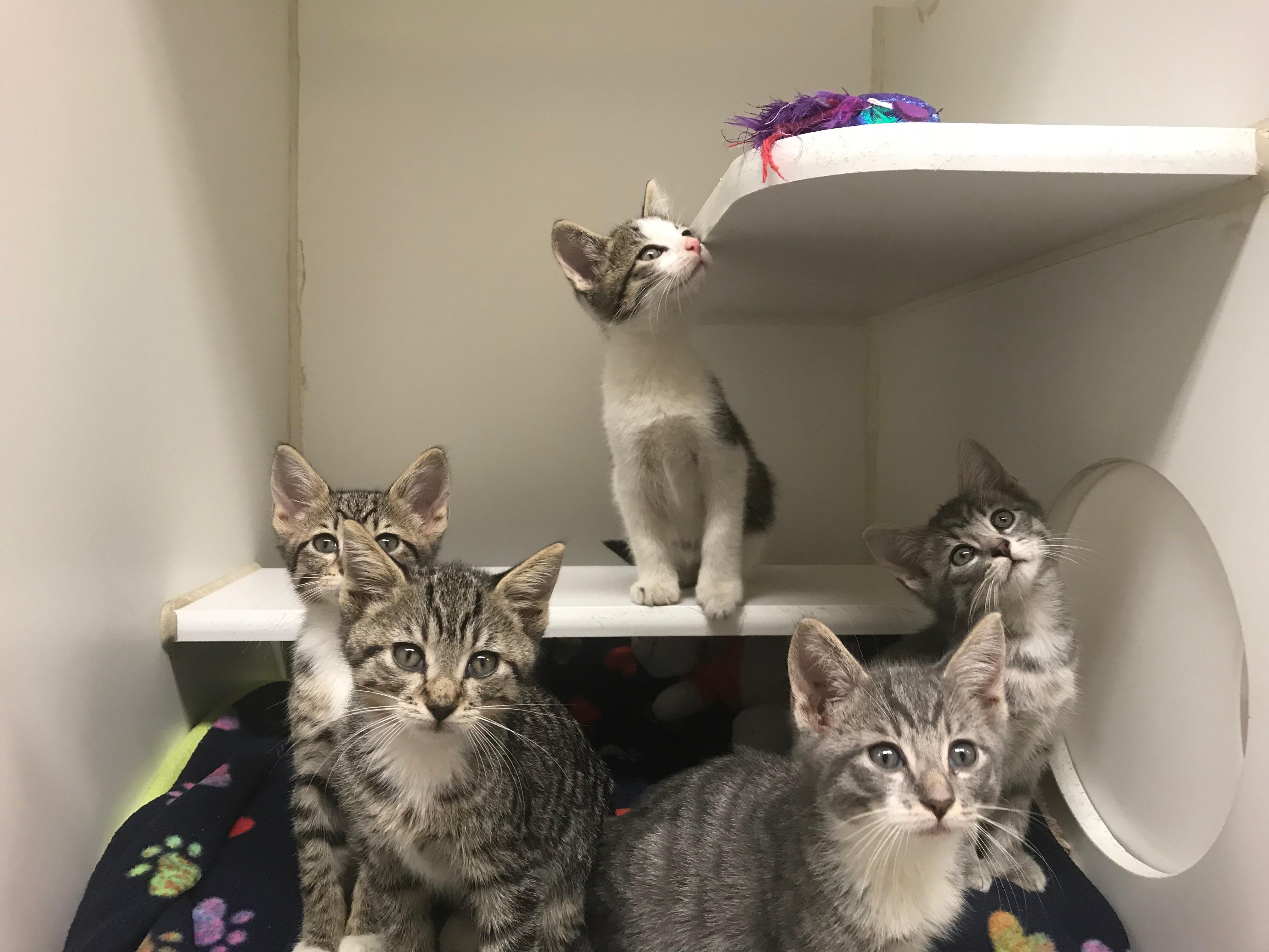 Cats in Condo
