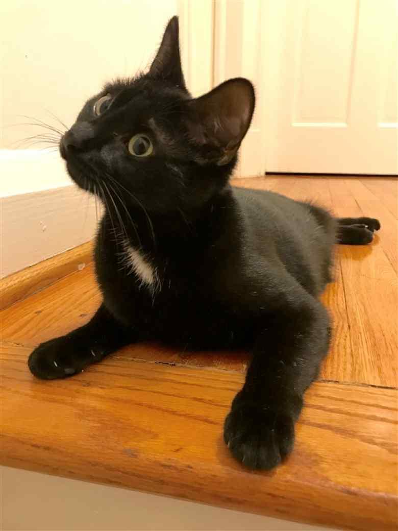 Tater Tot Black Kitten